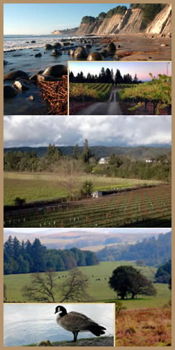 Sonoma Wine Country Scenery